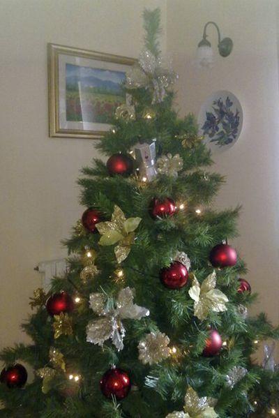 Moka si arrampica sull'albero di Natale