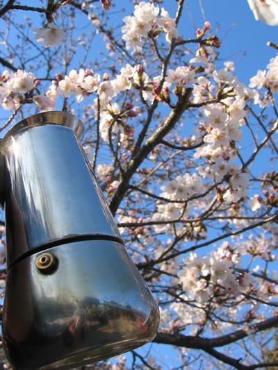 Moka che ammira il ciliegio in fiore