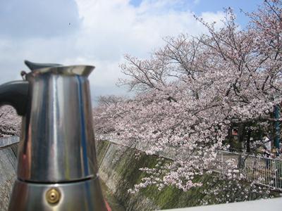 Moka contempla la primavera giapponese