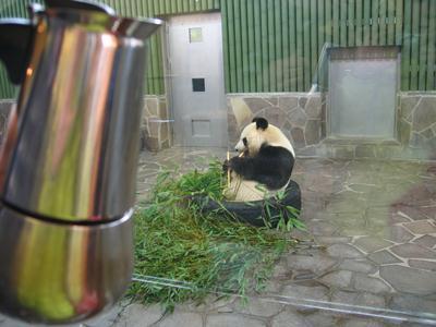 Moka in visita dall'amico panda
